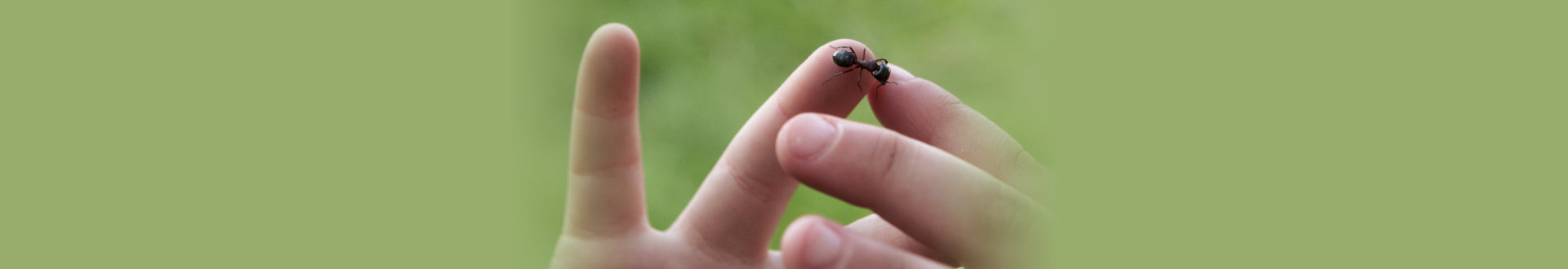 Closeup of Ant Crawling on Toddlers Hand